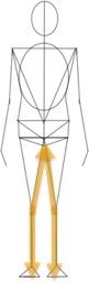 脚の内側と骨盤底